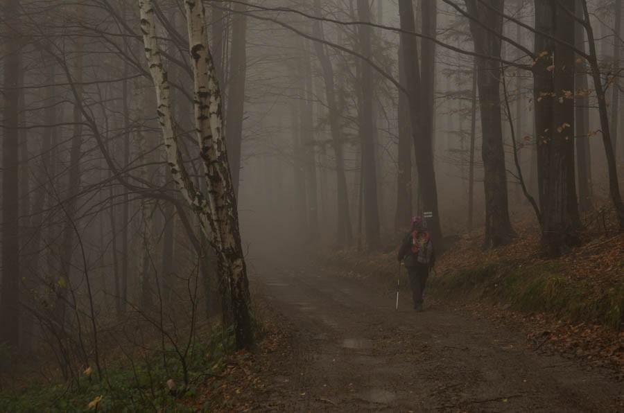 Mglista Trzonka narozruch. Beskid Mały mgielny