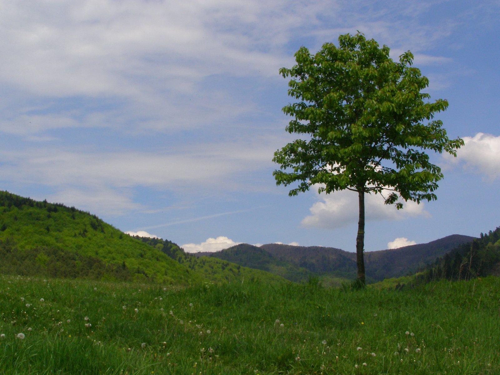 ce2038 1 - Góry Czerchowskie – wokół Kamienicy