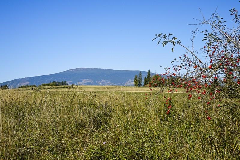 12 - Zielony szlak zJabłonki podBabią. Wcieniu wielkiej góry