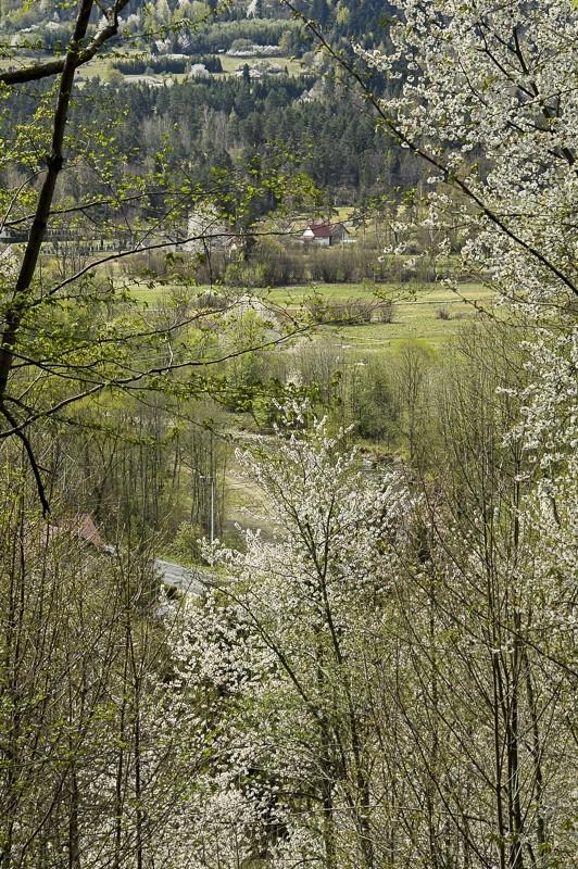 03 - Pasmo Pewelskie. Czeretniki wiosenną porą
