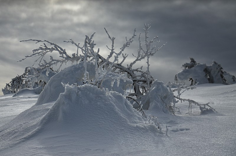 08 - Królewna Śnieżka itysiąc krasnoludków