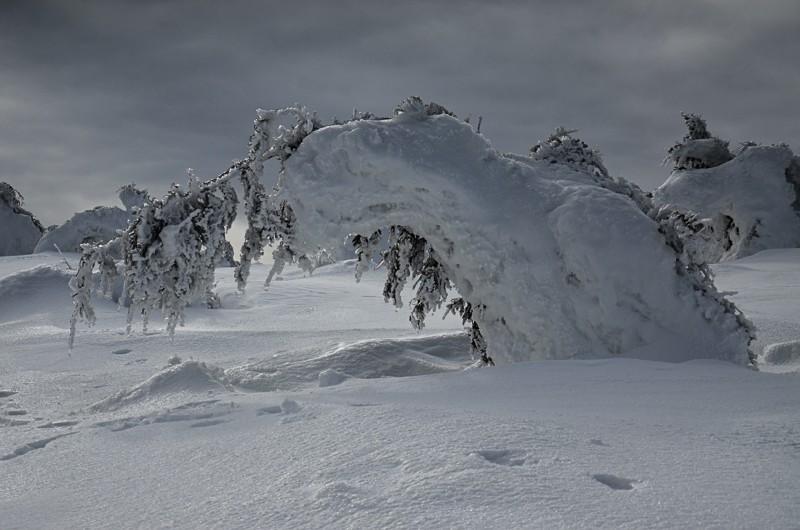 12 - Królewna Śnieżka itysiąc krasnoludków