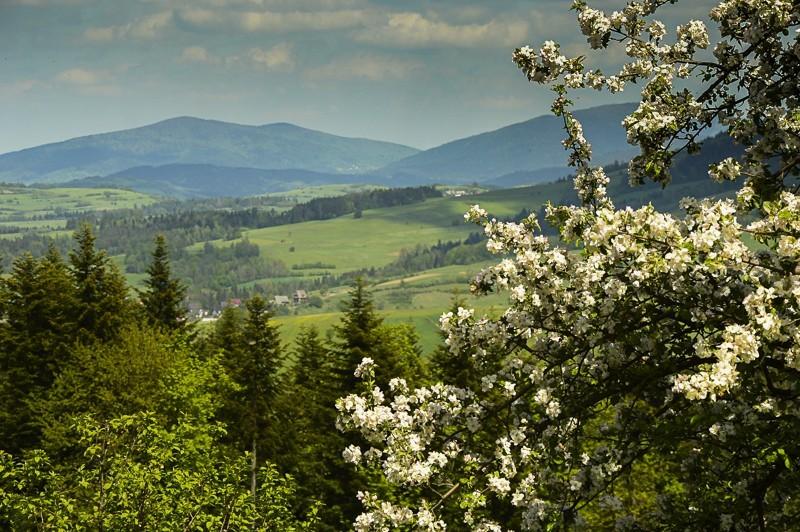 08 - Góra Chabówka. Widokowe szlaki wokolicach Rabki