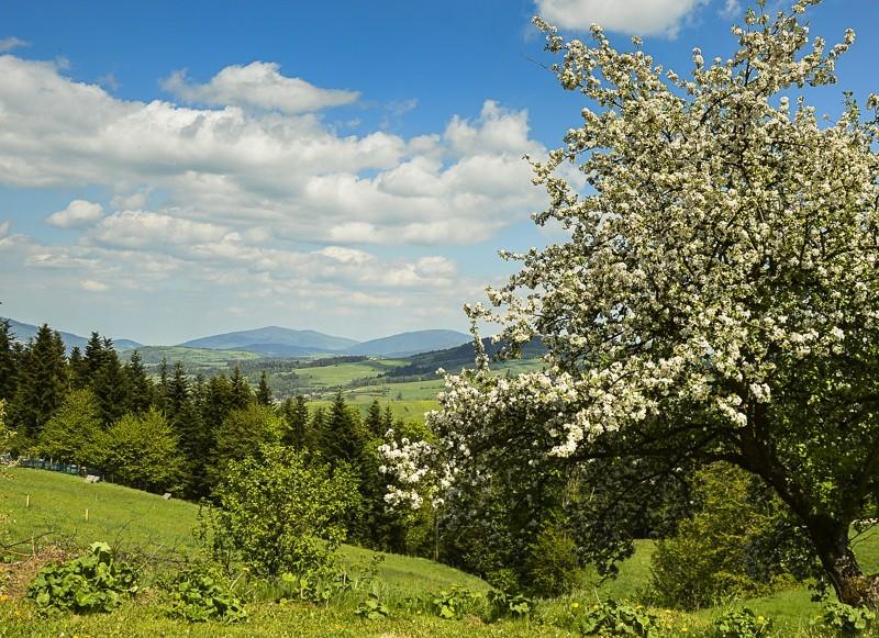 09 - Góra Chabówka. Widokowe szlaki wokolicach Rabki