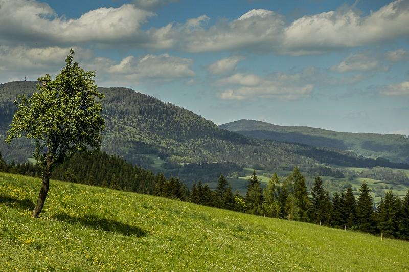 11 - Góra Chabówka. Widokowe szlaki wokolicach Rabki