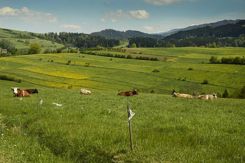 12 - Góra Chabówka. Widokowe szlaki wokolicach Rabki
