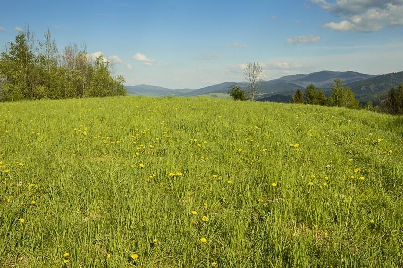 59 - Góra Chabówka. Widokowe szlaki wokolicach Rabki